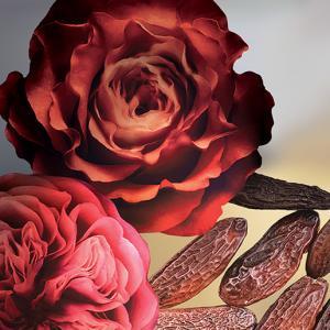 rosa gourmand keiko mecheri